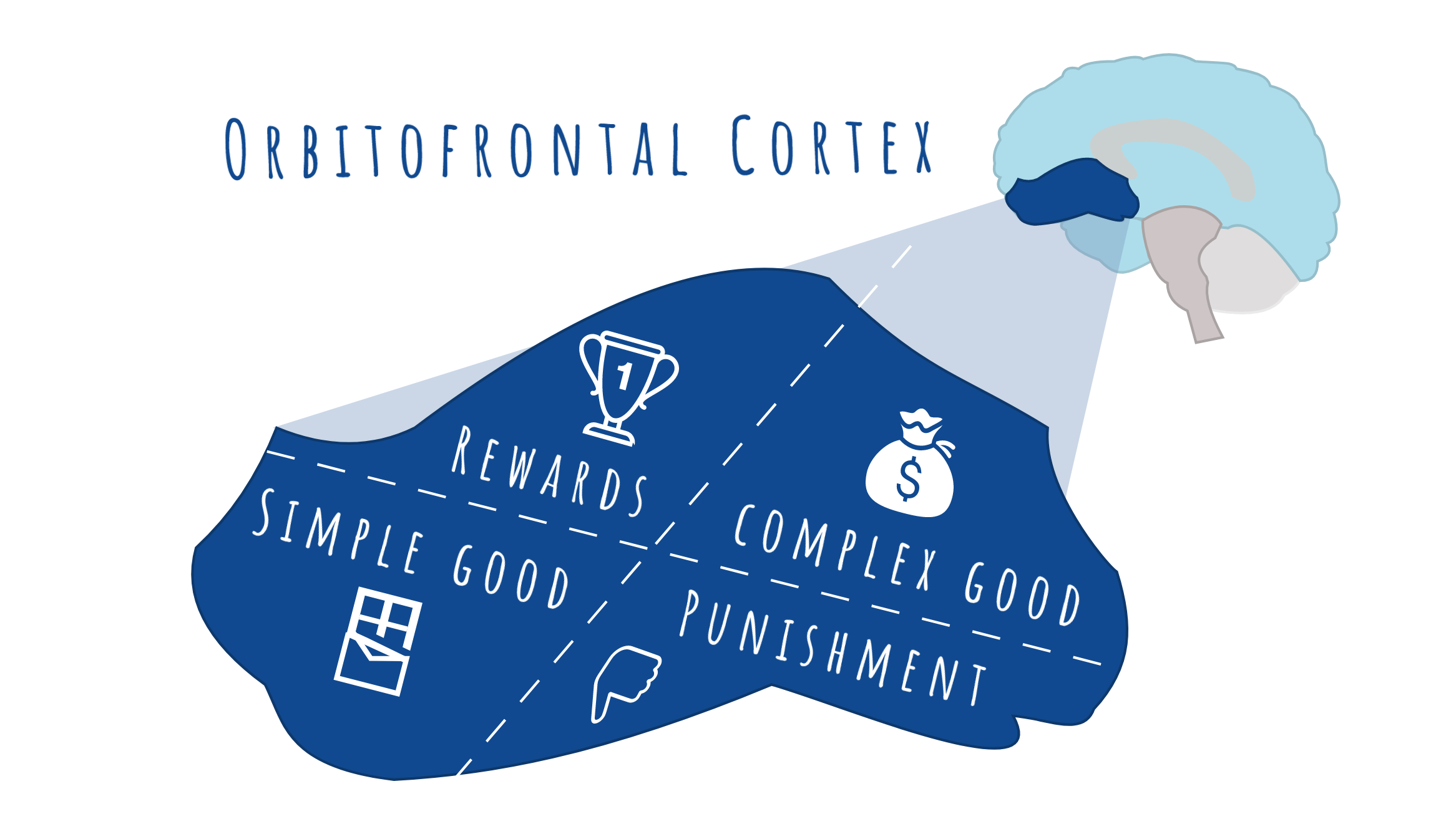 The different areas of the OFC for reward, punishment, simple good and complex good