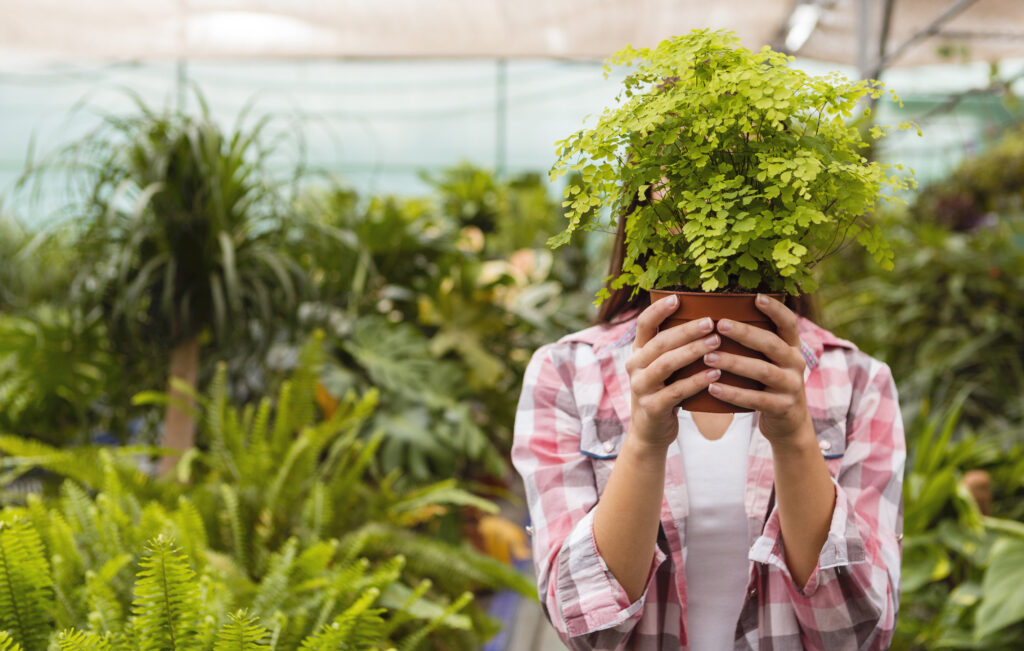 Here's How Indoor Plants Help Your Brain Health