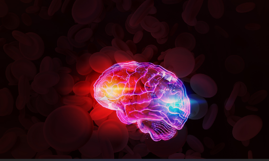 Three Amazing Facts About Blood and Brain Function